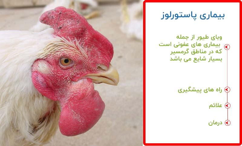 بیماری وبا در مرغ