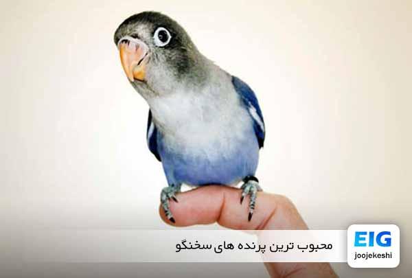 پرنده های سخنگو کدامند؟