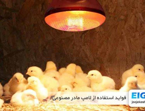فواید استفاده از لامپ مادر مصنوعی