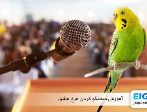 چگونه به مرغ عشق سخن گفتن یاد دهیم (آموزش جامع)