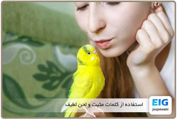تربیت کردن و حرف یاد دادن به مرغ عشق - جوجه کشی دات کام