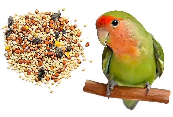 تغذیه طوطی برزیلی