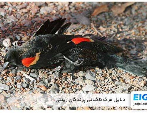 آشنایی با مهمترین دلایل مرگ ناگهانی پرندگان