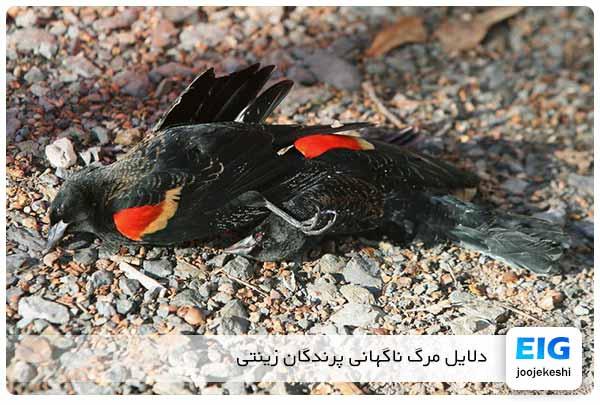 چرا پرندگان خانگی و زینتی ناگهان می میرند