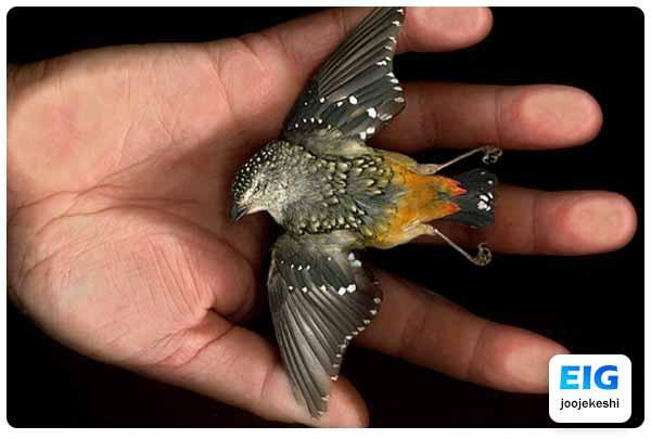 مرگ پرنده در اثر استری و سکته قلبی