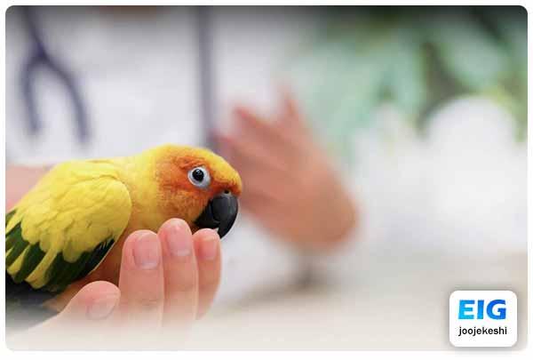 پیشگیری از مرگ ناگهانی پرندگان