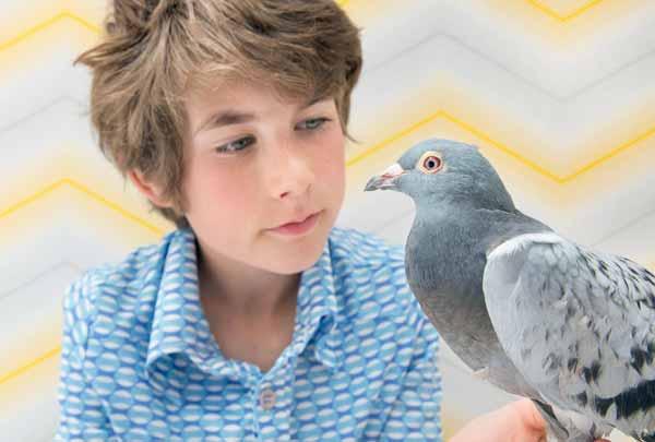 بیماری کبوتر شپش