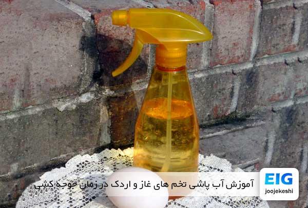 آموزش آب پاشی تخم های غاز و اردک در زمان جوجه کشی - جوجه کشی دات کام