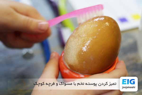 تمیز کردن پوسته تخم با مسواک و فرچه کوچک - جوجه کشی دات کام