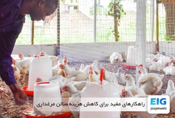 راهکارهای مفید برای کاهش هزینه سالن مرغداری - جوجه کشی دات کام