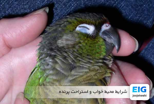 شرایط محیط خواب و استراحت پرنده - جوجه کشی دات کام