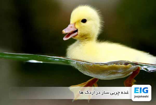 غده چربی ساز در اردک ها - جوجه کشی دات کام