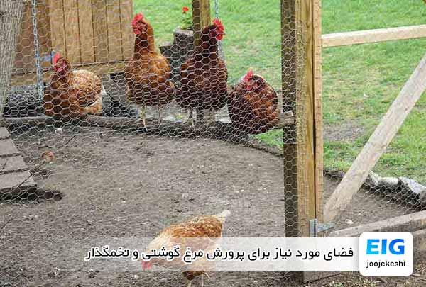 فضای مورد نیاز برای پرورش مرغ گوشتی و تخمگذار - جوجه کشی دات کام