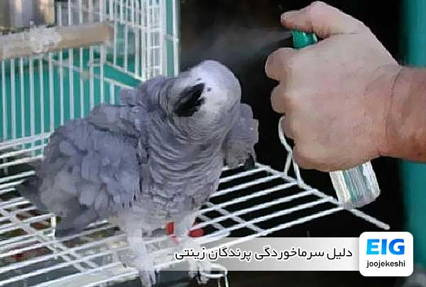 دلیل سرماخوردگی پرندگان زینتی - جوجه کشی دات کام