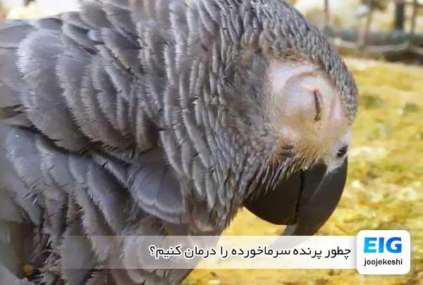 چطور پرنده سرماخورده را درمان کنیم؟ - جوجه کشی دات کام