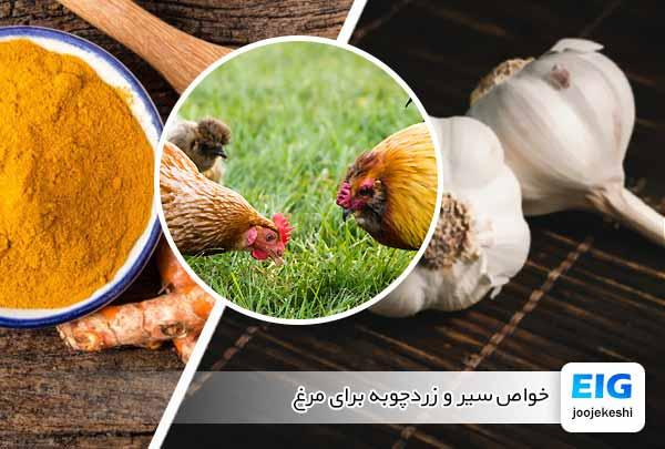 خواص سیر و زردچوبه برای مرغ - جوجه کشی دات کام